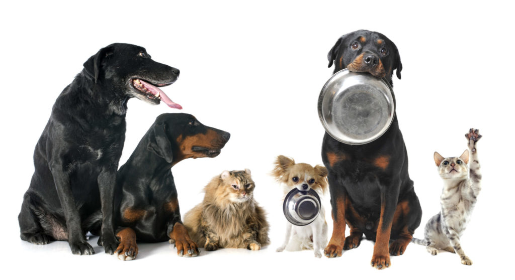Hunde Trockenfutter - was fütterst du da eigentlich?