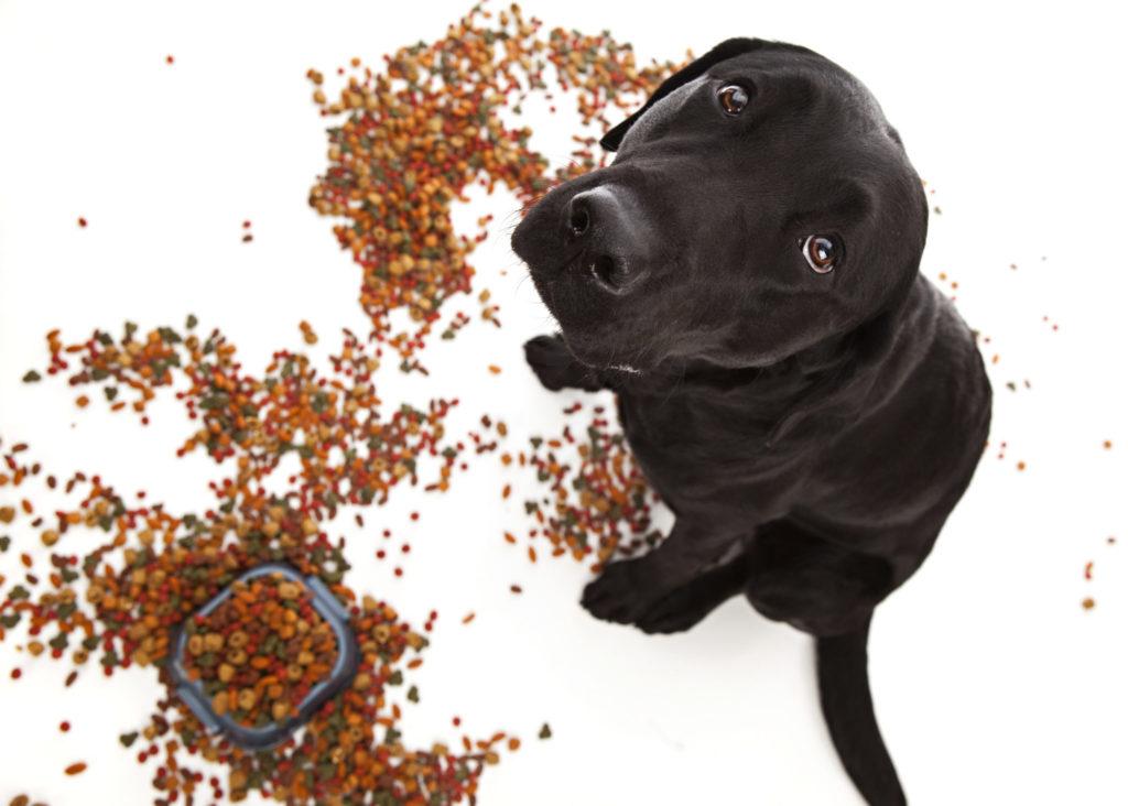 Hundetrockenfutter ist nicht artgerecht